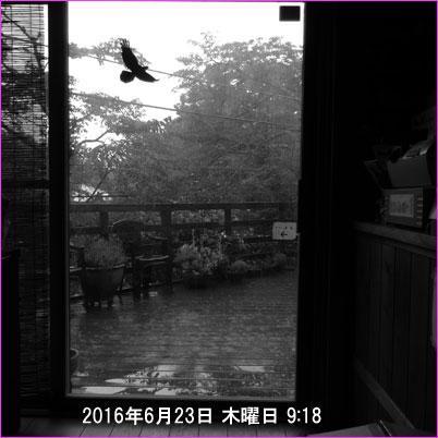 20160623-mx__4733.jpg