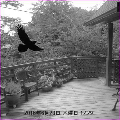 20160623-mx__4736.jpg